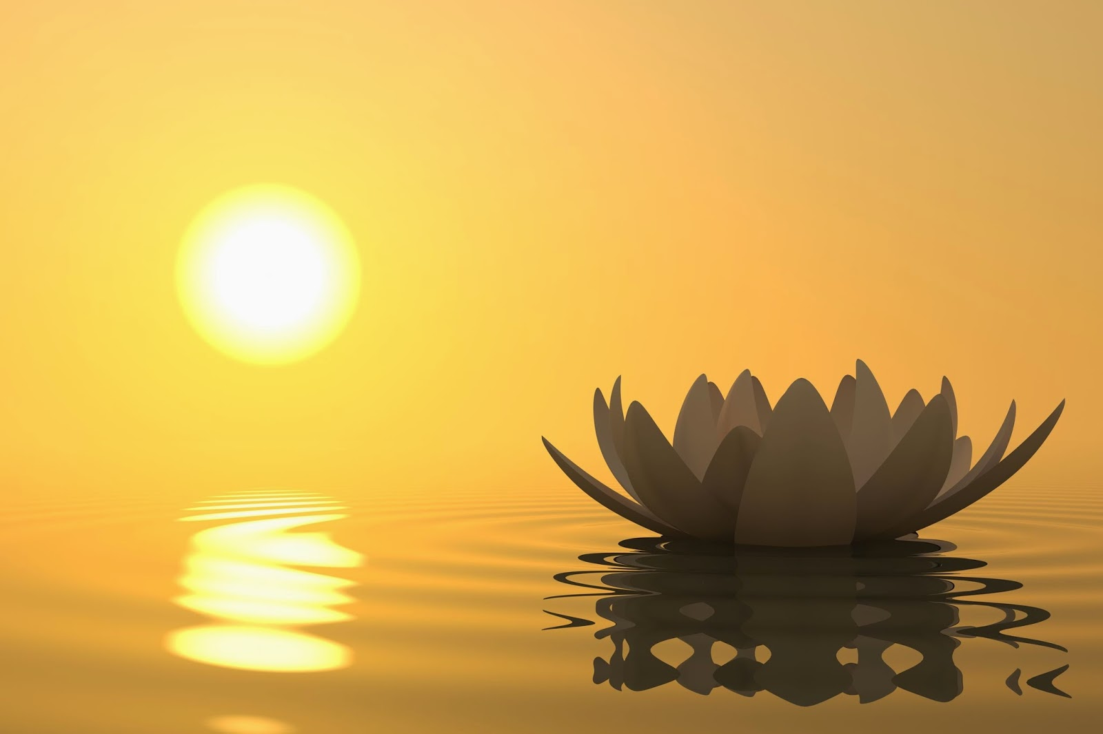lotus sun